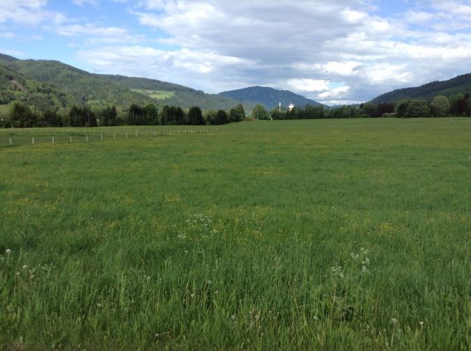 Auf den umliegenden Wiesen wird hochwertiges betriebseigenes Pferdeheu und Heulage geerntet