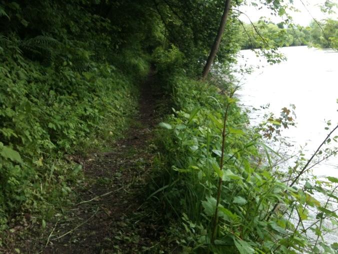 Über 5 km privates Reitwegenetz - auf Wiesen, im Wald und entlang der Mur