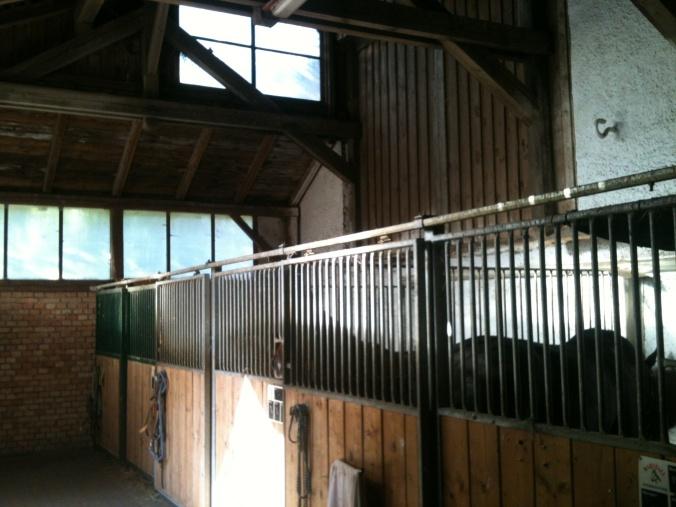 Auch alle Innen-Boxen sind groß (3x4 Meter), hell und meist mit hohen Decken