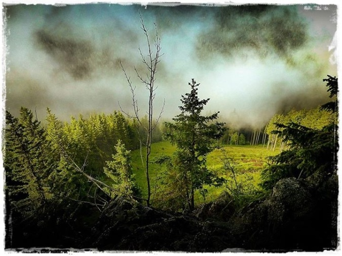Wald im Gößgraben